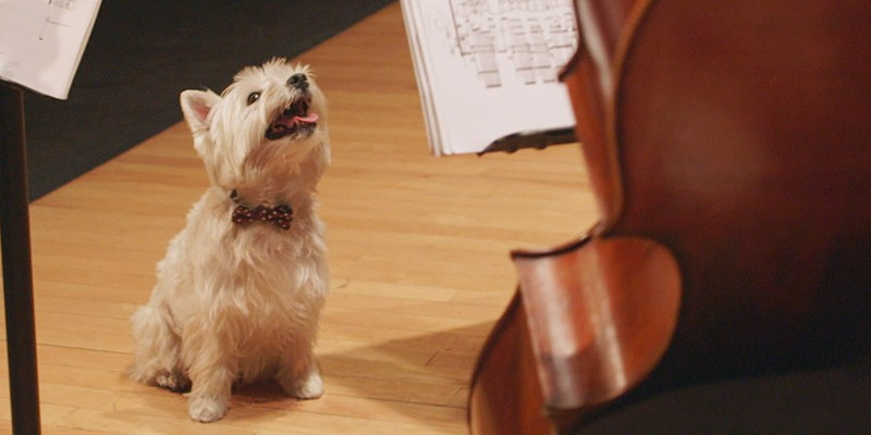 Announcing Canine Composers